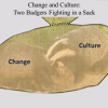 Change and Culture: Two Badgers Fighting in a Sack