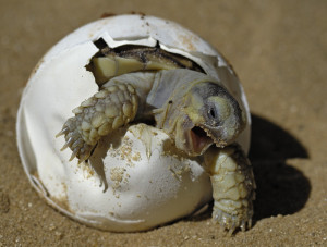 turtle out of shell